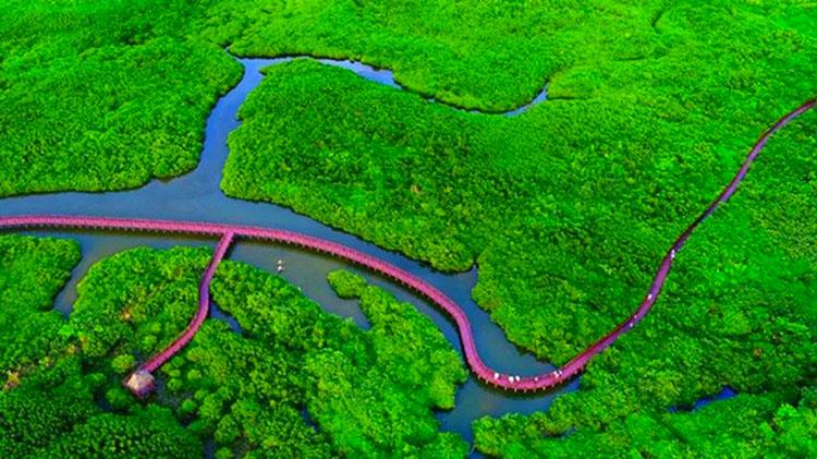 海湾雨林配套图